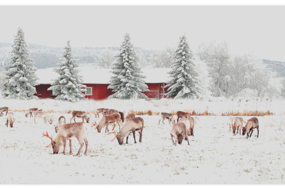 McCoy Federal Credit Union sponsors 20th Annual Greg Warmoth Reindeer Run