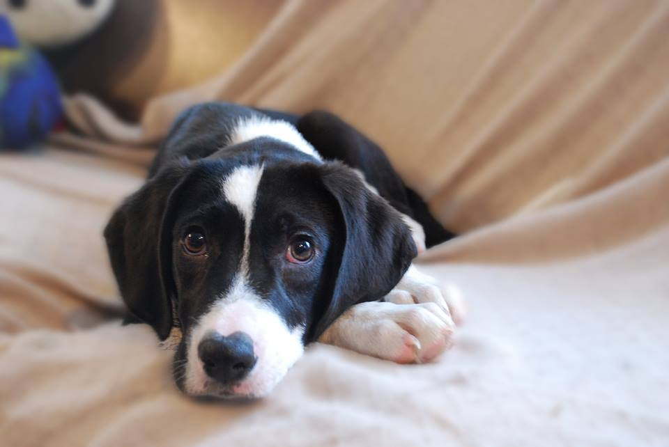 CONSIDER THIS: The True Cost of Pet Ownership