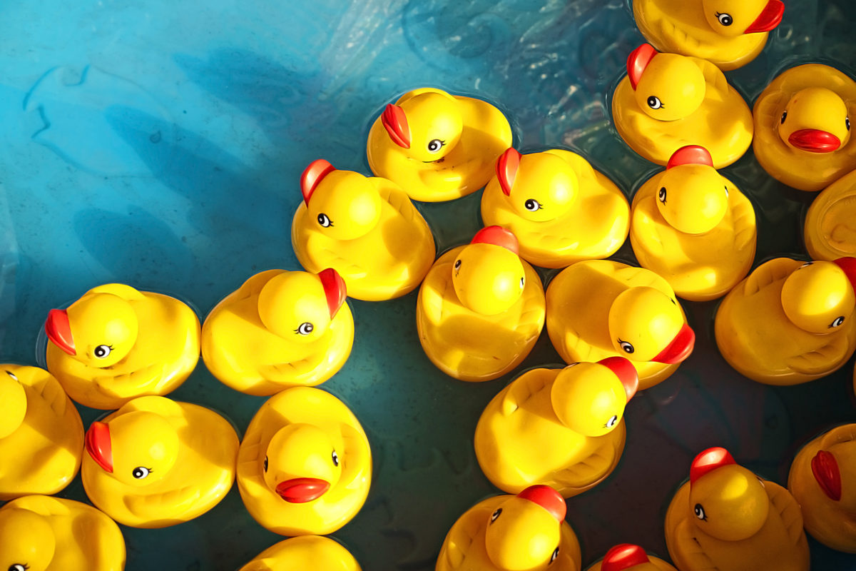 """North Main Credit Union """"decs"""" a duck to support local literacy"""
